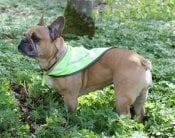 Insect shield scarf hund